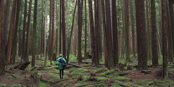 VIFF 2017 Review: Forest Movie | Jon The Blogcentric